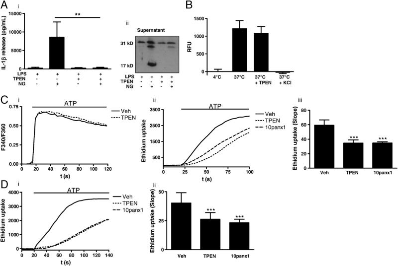 Zinc-dependent mechanism. (A) Nigericin (20 μM, 10 min)-induced IL-1β release (i) and pro-IL-1β processing (ii) in LPS-treated (1 μg/mL, 2 h) peritoneal macrophages was inhibited by TPEN. (B) In vitro inflammasome assembly and caspase-1 activity, induced by hypotonic lysis of LPS-treated peritoneal macrophages was measured by <t>Ac-YVAD-AMC</t> cleavage, and was not inhibited by TPEN. RFU, relative fluorescence units. (C) The effects of a 20 min incubation of 50 μM TPEN on the Fura-2 (F340/F360), [Ca 2+ ] i response to 1 mM ATP in P2X7 expressing HEK-293 cells (i). Representative fluorescence traces showing the effects of vehicle (DMSO), TPEN (50 μM), and 10 panx1 (mimetic pannexin-1 peptide, 400 μM), on ATP (3 mM) induced ethidium dye uptake in P2X7 expressing HEK-293 cells (ii). A summary of the slope of ethidium dye uptake in P2X7 expressing HEK-293 cells (iii). (D) Representative fluorescence traces showing the effects of vehicle (DMSO), TPEN (50 μM), and 10 panx1 (mimetic pannexin-1 peptide, 400 μM), on ATP (3 mM) induced ethidium dye uptake in LPS-treated primary mouse peritoneal macrophages (i). A summary of the slope of ethidium dye uptake in primary mouse peritoneal macrophages (ii). Data show the mean±SD of at least three independent experiments. Fluorescence traces are representative of at least three separate experiments. *** p