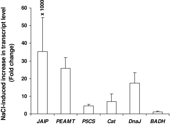 Expression study by Real-time RT-PCR of a few unigenes varying in EST redundancy . Real-time PCR (qRT-PCR) was conducted for five unigenes encoding JAIP, catalase, PEAMT, P5CS and DnaJ to see the effect of NaCl treatment on their expression. qRT-PCR was also performed for BADH . Actin gene served as the internal control. RNA isolated from the leaves of control and NaCl treated plants was individually set for qRT-PCR using QuantiFast SYBR Green RT-PCR kit (Qiagen, USA) and 1 μM gene-specific primer. Each bar represents the number of fold increase in the transcript level of a gene in the plant upon NaCl treatment compared to the control level. The values presented are the mean ± standard deviation (sd) of three independent experimental analysis.