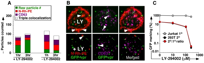 Inhibiting MVB formation abrogates 2° transfer. (A) Enumeration of GFP-vpr vector genomes (green) associated with select MVB markers (N-Rh-PE, red and CD63 tetraspanin, magenta) following exposure to 100 µM LY-294002. Cell aliquots were collected at 1 and 3 hours following exposure. (B) Top panels are representative images from untreated cells, bottom panels representative of treated cells. (C) Functional effect of LY-294002 on 2° transfer of vector genomes. Jurkat carrier cells were pretreated with escalating doses of LY-294002 as in (A,B) followed by vector exposure for 3 hours in the presence of the inhibitor, pronase wash, and 24 hour co-culture with 293T cells. Primary marking (gray), 2° transfer (black), and % efficiency of 2° transfer (red) are shown.
