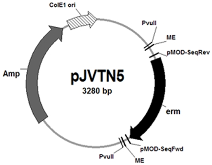 Modification of the EZ-Tn 5 -encoding vector for random mutagenesis in C. perfringens . To allow selection of C. perfringens transformants after electroporation with the EZ-Tn 5 transposon, a C. perfringens erythromycin resistance determinant ( erm ) was cloned into the multiple cloning site in the Epicentre EZ-TN 5 -encoding pMOD-2 vector creating pJVTN5. This plasmid also contains PvuII-recognized sequences flanking the mosaic end (ME) sites, which are specifically recognized by the EZ-Tn 5 transposase.