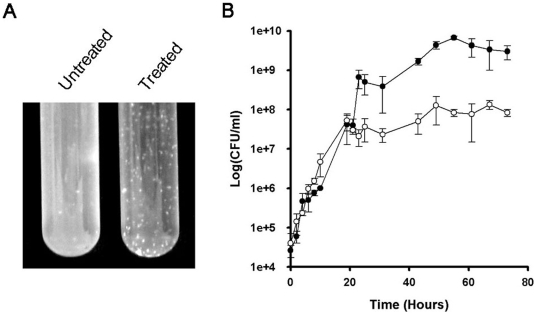 In vivo effect of platensimycin against M. smegmatis . (A) Clarification of cultures due to clumping and cellular lysis at time point 72 h. (B) Cultures were grown to an OD 600 nm of 0.4 upon which 14 µg/ml of platensimycin was added, samples were take over a 72 h period. Viable counts were calculated as per the methods where the mean CFU per millilitre from three independent experiments was calculated. •, M. smegmatis ; ○, M. smegmatis + platensimycin.