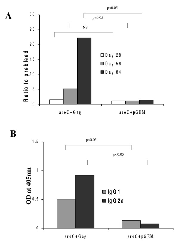 HIV-1 subtype C Gag-specific serum IgG responses in mice vaccinated with recombinant Salmonella vaccine vector . Groups of mice (5 per group) were vaccinated with live recombinant Salmonella vaccine that expressed HIV-1 Subtype C Gag (aroC+Gag) or an antigen-negative Salmonella control vaccine (aroC+pGEM) as indicated in Figure 2. Serum (pooled from 5 mice per group) was isolated from blood taken before each vaccination on day 0, 28 and 56 and just before sacrifice on day 84. (A) The HIV-1 Gag-specific IgG for each group of mice with a 1/100 serum dilution. The data are the ratio of the OD 405 nm for vaccinated mice and the OD 405 nm for the day 0 serum (pre-bleed). (B) The HIV-1 Gag-specific IgG1 and IgG2a were measured in serum of each group of mice on Day 84 with a 1/100 serum dilution. Each bar represents the mean OD 405 nm value. Differences in antibody responses between vaccine groups at different time points were analyzed by a two-sample student's t-test and a p