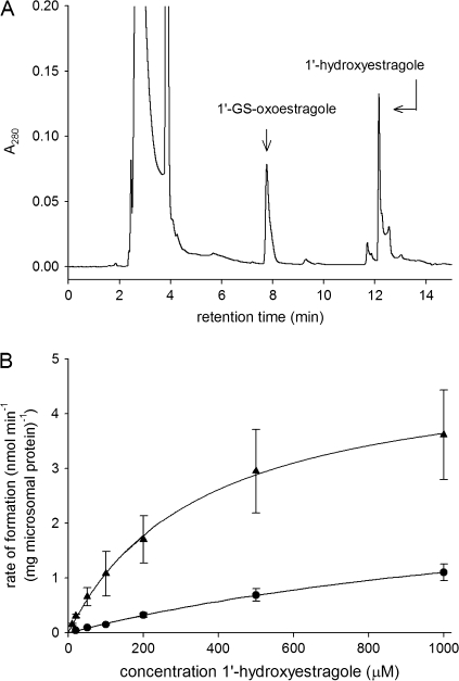 (A) Chromatographic profile of an incubation with human liver microsomes at a substrate concentration of 500μM 1′-hydroxyestragole, NAD + as cofactor and GSH to trap the transient 1′-oxoestragole at an incubation time of 10 min. (B) 1′-Hydroxyestragole concentration dependent rate of formation of 1′-oxoestragole by human (filled triangle) and male rat (filled circle) liver microsomes as determined by quantification of the GS-1′-oxoestragole, which is assumed to represent the formation of 1′-oxoestragole. In the plots each point represents the mean (± SD) of three replicates.