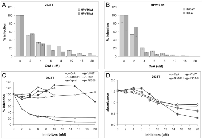 CyP facilitate HPV infection. 293TT (A), HaCaT (B), or HeLa cells (B) were infected with HPV16 (A,B,C) or HPV18 pseudovirus (B) in presence of indicated inhibitors and infection was scored at 72 hpi. (D) Effect of drugs on cell growth was determined by the MTT assay. We did not notice significant increase in cell death. CsA: cyclosporine A; VIVIT: cell permeable 11R-VIVIT; Nfdp: nifedipin; Vpml: verapamil. Representative graphs are based on three replicates each with standard deviation indicated.