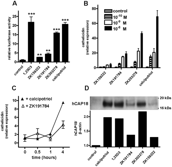 Vitamin D analogs enhance cathelicidin promoter activity and induce expression in primary human epidermal keratinocytes. (A) To analyze the effects of vitamin D analogs on the cathelicidin promoter a 5 kb fragment of the 5′ UTR of the cathelicidin gene CAMP was cloned into a luciferase reporter plasmid and transfected into HaCaT keratinocytes. Cells were stimulated with 1,25D3, ZK159222, ZK191784, ZK203278 and calcipotriol (all at 10 −7 M) and luciferase activity was assayed (** P
