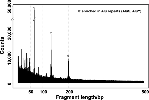 In silico analysis of human HpaII/MspI fragments by length. The numbers of fragments computationally generated from the reference human genome sequence were plotted by length, demonstrating higher frequencies of shorter fragments. The three peaks observed (at 69, 135 and 204 bp) are due to the presence of Alu SINEs (mainly AluS and AluY), peaks that can also be observed in the ethidium bromide staining of the MspI reference representation in Figure 2 (b, c).