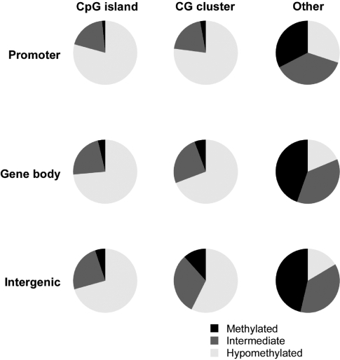 The distribution of cytosine methylation by genomic compartment. The distribution of cytosine methylation using the new high-resolution genome-wide HELP microarray is categorized as hypomethylated (white), methylated (black) and intermediate (grey) based on thresholds categorising the bimodal distribution of HpaII/MspI ratios. The results show relative hypomethylation of CpG islands or CG clusters ( 18 ) whether at promoters, within gene bodies or intergenically compared with other sequences. This is consistent with expectations for the distribution of methylation and indicates that the assay is capable of defining methylation states in a range of genomic contexts.