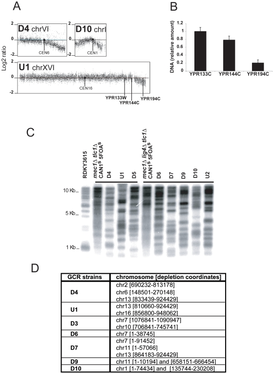 Degradation of chromosome ends in strains containing mec1 and tlc1 mutations. (A) aGCH analysis of representative chromosomes with signal decay at their ends is presented. (B) The qPCR validation of the decrease in the amount of genomic DNA on the right arm of chromosome XVI in the U1 GCR strain using primer pairs specific to YPR133W , YPR144C and YPR194C loci . The relative amounts of genomic DNA determined by qPCR at the YPR133W , YPR144W and YPR194C loci in the U1 strain are expressed relative to the signal obtained with each primer pair using RDKY3615 control DNA. (C) Telomere lengths in a RDKY3615 Can s 5FOA s strain, a mec1 sml1 tlc1 Can1 r 5FOA r post-senescence strain, a mec1 sml1 lig4 tlc1 Can1 s 5FOA s post-senescence strain, mec1 sml1 tlc1 GCR strains (D4, U1 and D5) and mec1 sml1 lig4 tlc1 GCR strains (D6, D7, D9 and D10) were analyzed by Southern blot with a poly(C 1-3 /TG 1–3 ) radiolabelled probe hybridized to Xho I-digested genomic DNA. (D) Chromosomes with at least one degraded end are listed. The chromosome number is followed by the standard SGD nucleotide coordinates of the chromosome region that has a negative log 2 ratio.