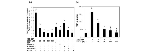 Gene expression and production of TNFα in advanced glycation end product-BSA-stimulated osteoarthritis chondrocytes. (a) Effect of epigallocatechin-3-gallate (EGCG), specific inhibitors for mitogen-activated protein kinases and NF-κB on the gene expression of TNFα in advanced glycation end product (AGE)-BSA-stimulated osteoarthritis (OA) chondrocytes. Primary chondrocytes were pretreated with EGCG (25 to 150 μM) for 2 hours and were stimulated by AGE-BSA (600 μg/ml) for 8 hours. Folds of TNFα mRNA expression, as compared with control and normalized to GAPDH, were determined by quantitative RT-PCR. Concentrations of specific inhibitors of JNK (SP600125), ERK (PD98059), p38 (SB202190) and NF-κB (MG-132) used in these studies were 10 μM, 50 μM, 100 μM and 100 μM, respectively. Native BSA (600 μg/ml) was used as a negative control. (b) Effect of EGCG on the production of TNFα in AGE-BSA-stimulated OA chondrocytes. Primary chondrocytes were pretreated with EGCG (25 to 150 μM) for 2 hours and were stimulated by AGE-BSA (600 μg/ml) for 24 hours. The production level of TNFα was determined by sandwich ELISA. Results are representative (mean ± standard error of the mean) of duplicate experiments with OA chondrocytes obtained from five age-matched and sex-matched OA donors; data without a common letter differ, P