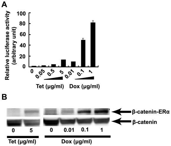 Tetracycline inducibility of BAC E11-IGR-β-catenin-ERα. As a gene of interest, the coding sequence of β-catenin-ERα fusion protein is engineered into BAC. (A) The activity of firefly luciferase, a surrogate marker is assayed to reflect the activity of P tet bi. HTB56 cells cultured in 6-well plates (300,000 per well) were cotransfected with 1 µg supercoiled BAC E11-IGR-β-catenin-ERα and 0.1 µg of renilla luciferase-encoding pRLSV40 DNA by lipofectamine reagent. Cells were left untreated or exposed to indicated concentrations of Tet or Dox 24 hours after transfection and luciferase activity was measured in cell extracts 24 hours later. Data from 3 independent experiments are represented as means plus standard deviation (SD). The SD values are too small to be visible in the first five bars. The relative luciferase activity of Tet and Dox untreated cells were set as 1 arbitrarily (* P