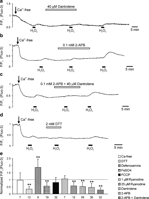H 2 O 2 releases Ca 2+ from the ER via ryanodine and IP3 receptors. a The ryanodine receptor antagonist dantrolene markedly decreased the amplitude of the H 2 O 2 -induced Ca 2+ rise, and upon wash-out of dantrolene the Ca 2+ transients recovered. In all displayed traces, H 2 O 2 was consistently applied at a concentration of 200 µM. b The IP3 receptor antagonist 2-APB also reversibly depressed the H 2 O 2 -induced Ca 2+ rise. c Combined inhibition of both ryanodine and IP3 receptors almost abolished the H 2 O 2 -induced Ca 2+ rise in a reversible manner. d The sulfhydryl (SH)-protectant dithiothreitol ( DTT ) severely depressed the H 2 O 2 -induced Ca 2+ release, confirming that H 2 O 2 indeed acts via oxidative modulation of SH groups. e Summarized pharmacological profile of the H 2 O 2 (200 µM)-induced Ca 2+ transients. Each drug targeting the ER, ryanodine, or IP3 receptors clearly reduced the H 2 O 2 -induced Ca 2+ rise. All drugs, except for deferoxamine and FeSO 4 , were applied in Ca 2+ -free solutions. Plotted are the normalized Ca 2+ responses, referred to the control responses evoked by H 2 O 2 in each cell before drug treatment. Asterisks mark statistically significant changes (** P