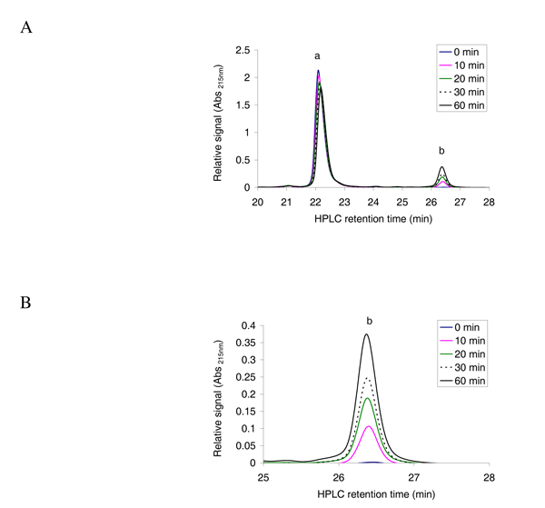 Reverse phase HPLC absorbance profile at 215 nm for the separation of acetylated and non-acetylated peptides . A ; The oligopeptide 1 MLGTE-RRR 24 (200 μM) was incubated with acetyl CoA (300 μM) and purified MBP-hNaa30p (80 nM) in acetylation buffer for 60 minutes at 37°C. Samples were collected at indicated time points and analysed with reverse phase HPLC. The resulting absorbance profile at 215 nm indicate good separation of unacetylated ('a') and acetylated oligopeptides ('b'). B ; An expanded version of the absorbance profile for the formation of acetylated oligopeptide. A clear time dependent increase in the absorption signal is observed.