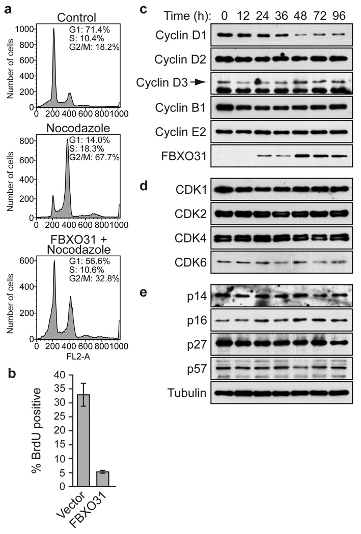 Ectopic expression of FBXO31 induces G1 arrest and selective degradation of cyclin D1. a , FACS analysis in SK-MEL-28 cells transduced with a retrovirus expressing empty vector or FBXO31 in the absence or presence of nocodazole. b , DNA replication assay, monitored by bromodeoxyuridine (BrdU) incorporation (error bars, s.d., n=3). c–e , Immunoblot analysis showing levels of cyclins ( c ), CDKs ( d ) and CDK inhibitors ( e ) at various time points following transduction with an FBXO31 retrovirus. Tubulin was monitored as a loading control. Ectopic expression of FBXO31 did not induce a DDR ( Supplementary Figure 17 ).