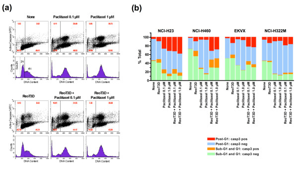 Flow cytometric analysis of DNA content and caspase-3 activation in NSCLC cells treated with either ReoT3D (MOI = 20) or paclitaxel alone (0.1 or 1 μM), or both in combination . (a) Shown are scattergrams (top) and histograms (bottom), ungated, of NCI-H23 cells treated with the indicated agent(s) for 24 hours. Harvested cells were fixed, permeabilized and stained with FITC-conjugated anti-active caspase-3 antibody followed by PI staining. Each histogram depicts the DNA content of cells in G1 (2N) and G2/M (4N), while the scattergrams demonstrate the proportion of cells with activated caspase-3 in different cell cycle phases. Values shown in each quadrant of scattergrams represent the percentages of cells. Of note, the histograms also show the apoptotic subdiploid peak (sub-2N), especially enhanced in paclitaxel-treated NCI-H23 cells. (b) The effects of ReoT3D-paclitaxel combination on caspase-3 activation and DNA content were compared among NCI-H23, NCI-H460, EKVX and NCI-322M. These NSCLC cells were analyzed as described in (a). Shown are the percentages of cells positive or negative for activated caspase-3 in sub- G1/G1 or post-G1 phases. The data shown in (a) and (b) are representative of 2 experiments.