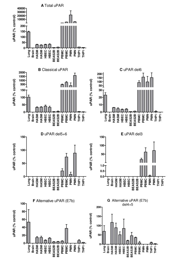 Expression of uPAR splice variant mRNA in different tissues/cell types . A series of real-time PCR (TaqMan) assays was used to measure the expression of different splice variants of uPAR in an extended panel of tissues/cell types (lung, brain, HASM, undifferentiated HBEC, BEAS2B, PMN, PBMC, THP1). Expression of each variant is shown as mean + SEM of three PCR replicates, for two donors or biological replicates as appropriate. Data are shown as 2 -ΔCt normalised to HPRT1 and relative to a suitable plasmid positive control containing the specific splice variant cDNA (designated 100%). (A) total uPAR, (B) total classical uPAR (exon 7), (C) classical uPAR exon 6 deletion, (D) classical uPAR exons 5+6 deletion, (E) classical uPAR exon 3 deletion, (F) total alternative uPAR (exon7b), (G) alternative uPAR exon 4+5 deletion. Classical uPAR exon 5 and 4+5 deletions and alternative uPAR exon 5 deletion were not detected.