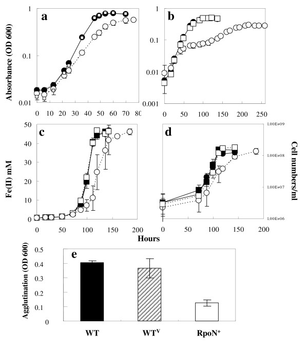 Characterization of the RpoN over-expression strain . Cell growth with fumarate as an electron acceptor was monitored by absorbance at 600 nm (a)(b). (a) acetate as the electron donor and fumarate as the electron acceptor (NBAF medium); (b): ammonia-free NBAF. Growth with Fe(III) as an electron acceptor was monitored by Fe(II) production (c) as well as cell numbers (d). Filled square: the WT V strain without IPTG; Empty square: the WT V strain with IPTG. Filled circle: the RpoN + strain without IPTG; empty circle: the RpoN + strain with IPTG. (a)-(d): Data are means ± standard deviations of triplicates. The production of pili was measured by agglutination assays (e). Data are means ± standard deviation of triplicates from two independent experiments (e).