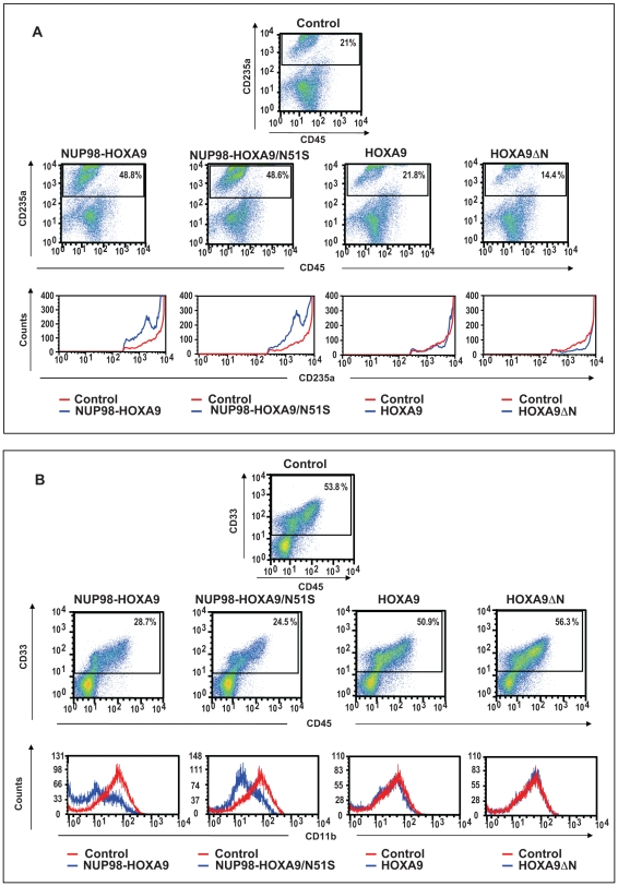 Flow cytometry shows homeodomain-independent disruption of human primary CD34+ cell differentiation by NUP98-HOXA9. (A) Flow cytometry for erythroid differentiation: Cells from the CFC plates (see Fig. 7 above) were harvested and stained with antibodies to CD45 and CD235a. The CD235a+ gate was plotted on a histogram (lower panels) to show the expression of CD235a relative to control cells. (B) Flow cytometry for myeloid differentiation: Cells from the CFC plates (see Fig. 7 above) were harvested and stained with CD45, CD33 and CD11b; the CD33+ gate was plotted on a histogram to show CD11b expression compared to control (lower panels). The percentages of cells falling within each gate are shown.