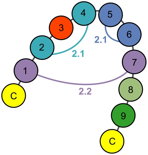 Covarying loop positions in EETI loop 3-substituted clones. Coupled loop positions in enriched EL3-9 clones are shown linked with their respective z-scores. Covariance patterns and correlated pairs of amino acids at each of the coupled positions were used to predict sequences of EETI loop 3 variants that adopt the knottin fold. For purposes of generating predictions, position three was set to asparagine or threonine, and positions eight and nine were set to glycine and tyrosine, respectively.