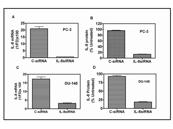 Depletion of IL-8 in PC-3 and DU145 cells by siRNA transfection : A and C: Decrease in IL-8 mRNA levels : Cells were transfected with 50 nM of control-siRNA (C-siRNA) or Smartpool siRNA against IL-8 (IL-8 siRNA). Total RNA was extracted 48 h after transfection to determine the levels of IL-8 mRNA by Q-RT PCR, as described in Materials and Methods (text). Each RNA sample was also simultaneously subjected to Q-RT PCR to determine the level of GAPDH mRNA for normalization. The threshold cycle (Ct) of each reaction generated by the iCycler program (Bio-Rad Inc.) was used to determine the relative mRNA levels in the test samples, using the formula: Fold Difference (FD) = 1-(2 ΔCt ), where, ΔCt = (Ct test RNA - Ct GAPDHRNA ). Final value of IL-8 mRNA, relative to that of GAPDH was expressed as: 1/FD × 100 to obtain integer values, in arbitrary units. B and D : Levels of IL-8 protein secreted into the culture medium , 48 h after transfection. IL-8 levels were measured using an ELISA kit. Levels are expressed as % of untreated control. Untreated PC-3 cells secreted ~ 60 ng IL-8/10 6 PC-3 cells/24 h and ~ 10 ng IL-8/10 6 DU145 cells/24 h.