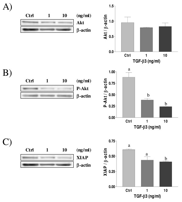 Expression of Akt (A), Phospho-Akt (B) and XIAP (C) in cultured rat decidual cells in vitro in response to TGF-β3 (ng/mL) as demonstrated by Western blot analysis . β-actin blots shown were used as controls to correct for loading in each lane. Blots shown are from one representative experiment. Graphics represent Western blot densitometrical analysis. Data represent the mean ± SEM of four independent experiments. Columns with different letters are significantly different from each other (P