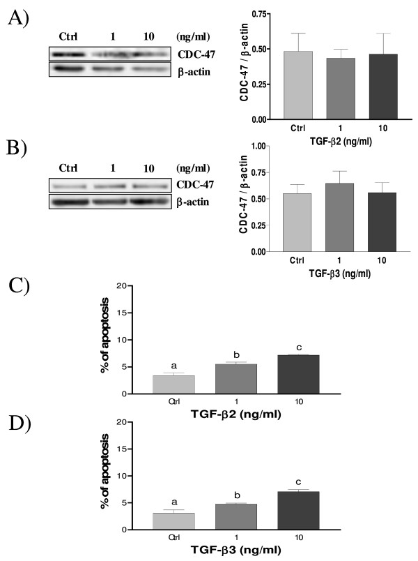 Expression of CDC-47 in cultured rat decidual cells in vitro in response to TGF-β2 (A) and TGF-β3 (B) (ng/ml) as demonstrated by Western blot analysis . β-actin blots shown were used as controls to correct for loading in each lane. Blots shown are from one representative experiment. Graphics represent Western blot densitometrical analysis. C) and D) effect of TGF-β2 and TGF-β3 (ng/ml) on cell survival in cultured rat decidual cells as demonstrated by Hoechst nuclear staining. Data represent the mean ± SEM of four independent experiments. Columns with different letters are significantly different from each other (P