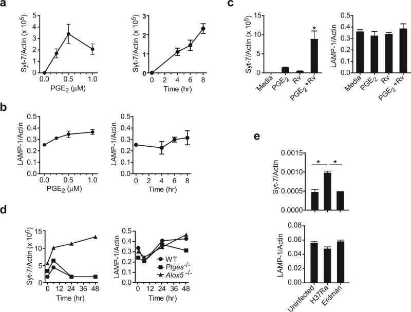 PGE 2 regulates Syt-7 expression in murine Mφ Dose and time response of ( a ) Syt-7 and ( b ) LAMP1 mRNA expression in naïve wild-type Mφ treated with PGE 2 . ( c ) Syt-7 and LAMP1 expression in wild-type Mφ infected or not with H37Rv after addition of PGE 2 (1 μM). ( d ) Syt-7 and LAMP1 mRNA expression in Alox5 −/− , Ptges −/− and wild-type (WT) Mφ at indicated times after infection with H37Rv. ( e ) Wild-type mice were infected or not by the aerosol route with a low dose (~ 100 CFU) of H37Rv or H37Ra. After 7 days of infection, RNA was extracted from the whole lung and the expression of Syt-7 and LAMP1 mRNA was measured by real-time PCR. The expression of Syt-7 or LAMP1 was normalized to β-Actin. Results are from one representative of 2 ( a, b, c , and f ) and 3 ( d, e ) independent experiments. n=3 mice per group; (error bars, s.e.m.) *, p