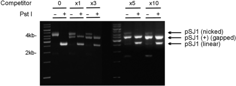 Preparation and purification of pSJ1(+). Gel electrophoretic analysis of pSJ1 following treatment with Nt Bpu10I. In the absence of competitor DNA (lanes marked 0) a nicked plasmid, where the excised strand remains associated with the plasmid by Watson–Crick interactions, is produced. Cutting with PstI gives a linear plasmid as the PstI site remains in a double-stranded region. Adding increasing amounts of competitor (excess over plasmid denoted by x1, x3, x5 and x10) progressively gives more of the desired gapped pSJ1(+) at the expense of the nicked intermediate. Treatment with PstI destroys any remained nicked plasmid but not the gapped pSJ1(+) as, in this case, the PstI site is in a single-stranded DNA region.