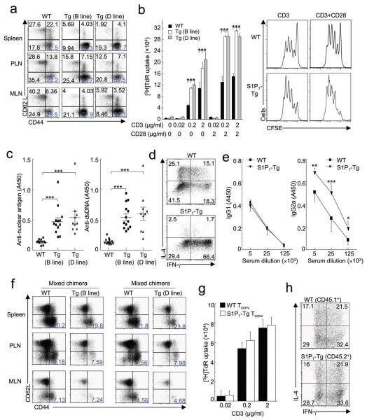 S1P 1 -Tg mice show disrupted immune homeostasis and develop age-related autoimmunity due to defects in the T reg compartment ( a - e ) Analysis of WT and S1P 1 -Tg mice. ( a ) Flow cytometry of T cell activation markers from peripheral lymphoid organs of aged mice (10 months). MLN, mesenteric lymph nodes. Data are representative of 6 independent experiments. ( b ) Proliferative response to TCR stimulation of T conv cells from WT and S1P 1 -Tg mice (2 months). Data are representative of 6 independent experiments. ( c ) Titers of anti-nuclear antigen and anti-ds DNA antibodies of aged mice (10 months). Data are the mean (±s.d.) of > 10 mice of each genotype and are representative of 4 independent experiments. ( d ) Effector cytokine production of activated T cells from WT and S1P 1 -Tg mice (5-6 months). Data are representative of 2 independent experiments. ( e ) Serum titers of IgG1 and IgG2a (5-6 months). Data are the mean of 5 mice of each genotype and are representative of 3 independent experiments. ( f - h ) Analysis of WT and S1P 1 -Tg T cells in the mixed BM chimeras (6-9 months after reconstitution), including expression of activation markers ( f ), proliferation ( g ), and effector cytokine production ( h ). Data are representative of 3 independent experiments. *, P