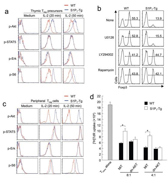 S1P 1 induces activation of Akt-mTOR to inhibit T reg development and function ( a ) IL-2 activated signaling pathways in thymic T reg precursors from WT and S1P 1 -Tg mice. CD4 + CD25 + Foxp3 − cells were purified and stimulated with medium alone or IL-2, and activation of Akt, STAT5, Erk and S6 ribosomal protein (S6) were examined by flow cytometry using phospho-specific antibodies. Data are representative of 4 independent experiments. ( b ) Effects of drug treatments on IL-2 induced Foxp3 expression in T reg precursors. CD4 + CD25 + Foxp3 − cells were treated with U0126, LY294002 and Rapamycin for 30 minutes, followed by IL-2 stimulation. Data are representative of 3 independent experiments. ( c ) IL-2 activated signaling pathways in peripheral T reg cells from WT and S1P 1 -Tg mice. T reg cells were stimulated with medium alone or IL-2, and activation of Akt, STAT5, Erk and S6 ribosomal protein (S6) were examined by flow cytometry using phospho-specific antibodies. Data are representative of 5 independent experiments. ( d ) Suppressive activity of T reg cells transduced with dn-Akt retrovirus. WT and S1P 1 -Tg T reg cells were transduced with control (MiT) and dn-Akt expressing (dn-Akt) retroviruses (non-transduced cells are shown on the right as a comparison), and transduced cells were sorted and used in the T-cell suppression assays with different T conv and T reg ratios. Data are representative of 3 independent experiments. *, P