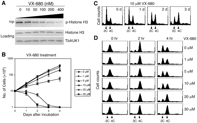 Effect of VX-680 on TbAUK1 kinase activity, cell growth and cell cycle progression in the procyclic trypanosomes. (A). Effect of VX-680 on TbAUK1 kinase activity. Recombinant TbAUK1 and histone H3 each fused with GST were purified and incubated with different concentrations of VX-680 (shown at the top) in the presence of γ- 32 P-ATP. The incubation was carried out at room temperature for 60 min. The assay mixtures were separated in SDS-PAGE and analyzed by Phosphor-Imager for the extent of histone H3 phosphorylation. (B). Effect of VX-680 on cell proliferation. Procyclic 427 cell line was cultivated in vitro in the presence of different concentrations of VX-680. Cell density was counted daily and plotted against incubation time. The results were from three independent experiments. (C). Effect of VX-680 on cell cycle progression in a non-synchronous trypanosome cell population. Procyclic 427 cell line was incubated with 10 µM VX-680 for 3 days. Cells were harvested each day after VX-680 treatment for flow cytometry analysis. (D). Effect of VX-680 on cell cycle progression in synchronized trypanosome cells. Procyclic 427 cell line was synchronized in late S-phase with 0.3 mM hydroxyurea for 16 hrs and released. Cells were then incubated with different concentrations of VX-680 for 2 and 4 hrs, respectively and subjected to flow cytometry analysis.