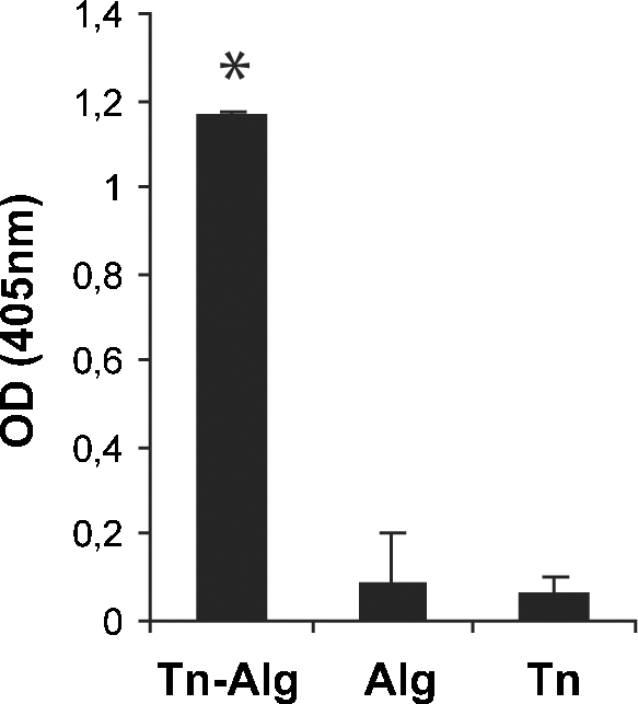 Efficacy of clusterization and antibody response. BALB/c mouse ( n = 6) sera were assayed after the third Tn-cBSA immunization. The histogram reports the mean values ± standard deviation (SD) of a comparative ELISA performed on Tn clusterized on alginate (Tn-Alg), alginate (Alg), and Tn (GalNAc-α- O -Ser). Mouse serum was used at a dilution of 1:100. Tn-alginate conjugation significantly improved the binding of specific antibodies to the target antigen compared with unclusterized Tn ( * P = 0.01). For these experiments, all the compounds were biotinylated to assure their immobilization on a streptavidin-coated 96-well plate and a polyvalent IgG/A/M-HRP secondary antibody was used. OD, optical density.