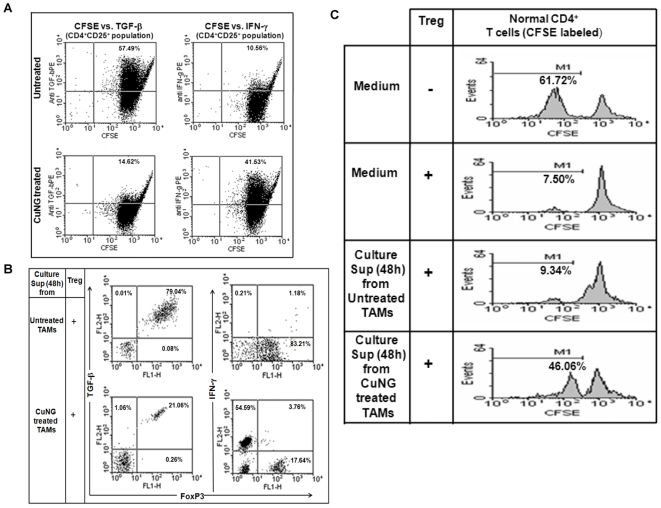 In vitro CuNG treatment caused reprogramming of Treg. A, B C) Flow cytometry. CD4 + CD25 + Treg populations were purified from TALs of untreated EAC/Dox bearing mice. (A) Treg cells were labeled with CFSE and then cultured for 96 h with cell free supernatant of TAMs (isolated from untreated EAC/Dox bearing mice) either kept untreated or treated in vitro with CuNG for 48 h. Intracellular IFN-γ and TGF-β production was analyzed with respect to specific isotype control by flow cytometry. Representative data of three independent experiments is shown. (B) Treg cells were cultured for 96 h with supernatant of 48 h culture of untreated or in vitro CuNG treated TAMs and fresh medium (1∶1). Intracellular IFN-γ and TGF-β production versus FoxP3 expression was analyzed with respect to specific isotype control by flow cytometry. Representative data of four independent experiments is shown. (C) Tregs (CD4 + CD25 + cells) isolated from ascitic fluid of untreated EAC/Dox bearing mice were cultured for 96 h in presence of cell-free supernatants from 48 h cultures of untreated or CuNG treated TAMs (culture supernatant: fresh medium being 1∶1). Now, these cells were washed and cultured with CFSE loaded CD4 + T cells isolated from inguinal and axillary lymph nodes of normal mice (Treg and CD4 + T cells were taken in a proportion of 1∶5) for 96 h. Fluorescence levels of CFSE were measured by flow cytometry. Proliferation of normal CD4 + T cells either in the presence or absence of Treg cells were also analyzed by CFSE fluorescence level. Representative data of 3 independent experiments is presented here.