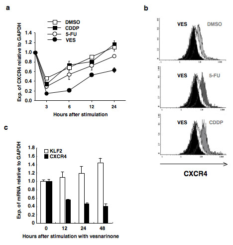 Downregulation of CXCR4 by vesnarinone . (a) CXCR4 mRNA was examined by quantitative PCR in B88 cells treated with chemotherapeutic agents (CDDP, 5-FU, or vesnarinone) or vehicle DMSO. (b) B88 cells treated with or without chemotherapeutic agents were incubated with or without anti-CXCR4 monoclonal antibody. Then the cells were incubated with PE-labeled goat anti-mouse IgG and analyzed by flow cytometry in order to determine the expression of CXCR4 protein. The white zones show the cells treated with vesnarinone stained by mouse IgG isotype control. The black zones show cells treated with vesnarinone, and gray zones show the cells treated with DMSO ( upper ), 5-FU ( middle ), or CDDP ( lower ), respectively. The black zones and gray zones were stained by anti-CXCR4 monoclonal antibody. (c) Vesnarinone downregulates CXCR4 mRNA and upregulates KLF2 mRNA in a time-dependent manner in ACC-M cells. ACC-M cells were treated with vesnarinone and quantitative RT-PCR was performed.