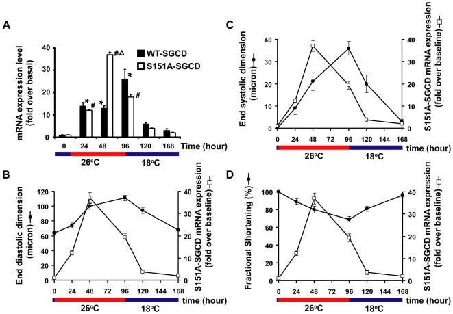 Expression of <t>S151A-SGCD</t> precedes cardiac function changes in adult Drosophila expressing <t>S151A-SGCD.</t> (A).Temperature shift from 18°C to 26°C results in deterioration in cardiac function and induction of S151A-SGCD expression. After a temperature shift to 26°C, the induction of transgene expression precedes the development of dilated cardiomyopathy by 48 hours as demonstrated by QRT-PCR measurements of S151A-SGCD mRNA levels compared to cardiac function by serial OCT. A second temperature shift back to 18°C represses S151A-SGCD mRNA expression and results in restoration of cardiac function by 48 hours. We performed three independent experiments using different batches of flies each time. The summary data for QRT-PCR at the indicated times and temperatures are expressed as the mean +/− SE of three independent experiments, each performed in triplicate. * p