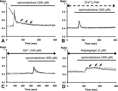 Time courses for the spironolactone-induced [Ca 2+ ] i dynamics under various modulations. Temporal changes of [Ca 2+ ] i for three ROIs are depicted (black, gray and dotted lines). ( A ) positive controls (only spironolactone stimulation). The initial acute increase (long arrow) and a gradual decline (small thick arrow) are shown. ( B ) spironolactone-induced [Ca 2+ ] i dynamics under extracellular Ca 2+ -free conditions ([Ca 2+ ] o -free). ( C ) spironolactone-induced [Ca 2+ ] i dynamics in the presence of Gd 3+ (100 µM). ( D ) spironolactone-induced [Ca 2+ ] i dynamics after depleting intracellular Ca 2+ stores by treatment with thapsigargin (2 µM). A gradual decline (small thick arrow) are shown.