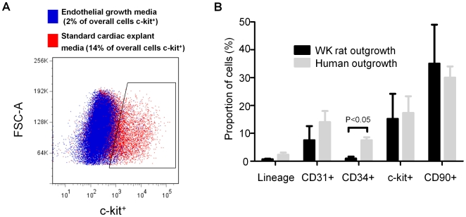 Effect of variation in culture methods on phenotype. (A) Effect of FBS content the proportion of the human CDCs expressing markers of CPC (c-Kit), endothelial (CD31, <t>CD34)</t> and mesenchymal (CD90) origin. (B) Flow cytometry dot plot demonstrating the influence of endothelial media and standard cardiac explant media on the proportion of WK rat outgrowth cells expressing the CPC marker c-Kit.