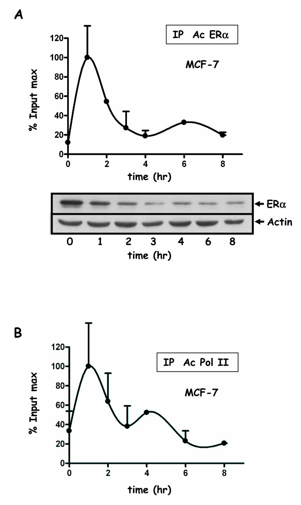 Recruitment of ERα and Pol II to the pS2 promoter in MCF-7 cells . ChIP-kinetic experiments were performed using anti ERα antibody (HC-20) ( A ) or anti-Pol II antibody ( B ). Cells were cultured in 10% FCS and then in 3% dextran-charcoal treated FCS for three days. Twenty four hours before experiment, cells were deprived of serum and subsequently treated for 2 hr with 2.5 μM α-amanitin, and then with 10 nM E2 during 8 hours. Chromatin was prepared as in Figure 4 or 5. Values are mean ± SD of two independent immunoprecipitation assays of the same chromatin, and expressed as in Figure 4. ERα (A) protein levels were analyzed by Western blot experiments. MCF-7 treatments for ChiP assays and Western blot experiments were identical. Extracts were prepared at indicated times, and Western blotted with antibodies for ERα (HC-20) or actin.