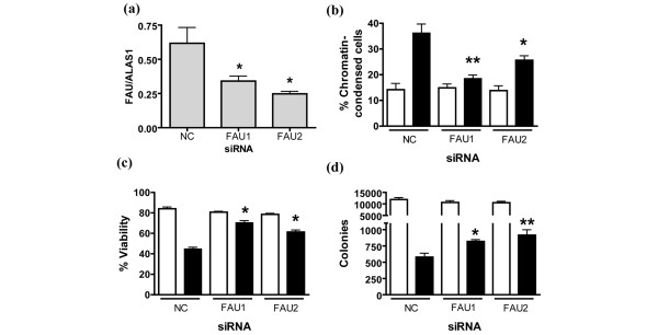 Downregulation of Fau inhibits UV-induced apoptosis of <t>T-47D</t> breast cancer cells. T-47D cells were transfected with one of two different siRNAs to Fau or with a negative control (NC) (Ambion code 4611) siRNA using RNAiFect (Qiagen). After 120 hours samples were collected for real-time RT-PCR analysis, and trypsinized cells were either exposed to UV light (40 J/m 2 ; closed bars) or were mock-irradiated (open bars), and then replated in fresh <t>medium.</t> (a) Real-time RT-PCR analysis of Fau transcript levels. Data, expressed relative to the house-keeping gene ALAS1 , are the mean ± standard error of the mean. * P