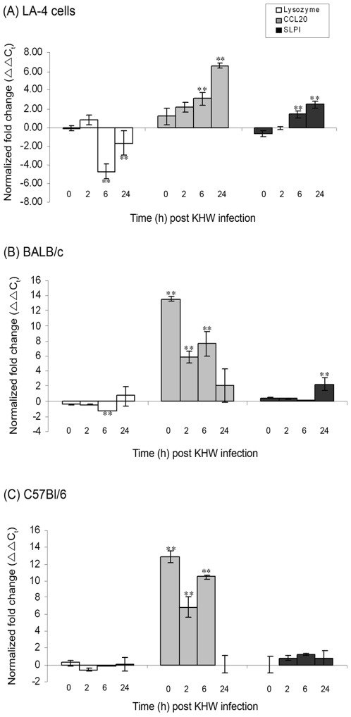 Differential expression of antimicrobial peptide genes in (A) LA-4 murine lung epithelial cell line and primary lung epithelial cells from (B) BALB/c and (C) C57Bl/6 mice following KHW infection. Every 4 bars represent 0 h, 2 h, 6 h and 24 h post infection. Lung epithelial cells were infected with KHW. RNA was extracted from the cells at 0 h, 2 h, 6 h and 24 h post infection and the expression of lysozyme (□), CCL20 (▪) and SLPI (▪) genes was quantified by qRT-PCR. Results are normalized to both β-actin and uninfected control cells, and were expressed as normalized fold change (ΔΔC t ) ± standard deviation of experimental triplicates. All results shown are representation of three independent experiments. ** P