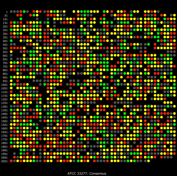 Map of relative abundance trends based on the ATCC 33277 gene order and annotation . This plot shows the entire set of consensus calls given in Additional file 1 : Table S1 arranged by ascending PGN number [ 11 ], which follows the physical order of genes in the genome sequence. Color coding: red indicates increased relative protein abundance for internalized P. gingivalis , green decreased relative abundance, grey indicates qualitative non-detects and black indicates an unused ORF number.