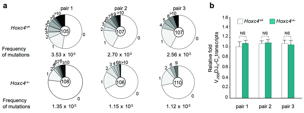 Decreased somatic mutation frequency in the Ig H chain intronic J H 4-iEµ DNA of Peyer's patch PNA hi B220 + (GC) B cells from 3 12-week-old Hoxc4 −/− mice as compare to their Hoxc4 +/+ littermates. ( a ) Pie charts depict the proportions of sequences that carry 1, 2, 3, etc. mutations over the 720 bp J H 4-iE µ DNA analyzed. The numbers of the sequences analyzed are at the center of the pies. ( b ) HoxC4 deficiency does not alter the level of V J558 DJ H -Cµ transcripts. V J558 DJ H -C µ transcripts in Peyer's patches B cells of these mice were measured by real-time qRT-PCR performed in triplicate samples using SYBR-green. In each sample, mRNA expression was normalized to CD79b expression. Data are means ± s.e. (bars) of triplicate samples from 3 independent pairs of Hoxc4 +/+ and Hoxc4 −/− mice. The analysis of the spectrum of mutations in Hoxc4 +/+ and Hoxc4 −/− mice is the subject of Supplementary Fig. 4 .