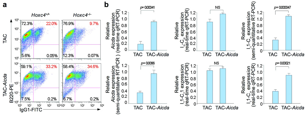 Enforced expression of AID rescues CSR in Hoxc4 −/− B cells. Hoxc4 +/+ and Hoxc4 −/− B cells activated with LPS were transduced with the TAC control or AID-expression TAC- Aicda retrovirus and cultured in the presence of LPS and IL-4. Three or 4 d after transduction, B cells were harvested for analysis of surface expression of B220 and <t>IgG1</t> ( a ) and expression of Aicda by real-time qRT-PCR and semi-quantitative RT-PCR, germline I µ -C µ and I γ 1-C γ 1 transcripts by real-time qRT-PCR, circle I γ 1-C µ transcripts by semi-quantitative RT-PCR and post-recombination I µ -C γ 1 transcripts by real-time qRT-PCR ( b ). Expression of these transcripts was normalized in each case to CD79b transcripts; expression of transcripts in Hoxc4 −/− B cells were depicted as ratios to those in Hoxc4 +/+ B cells. <t>FACS</t> data are from one representative of 5 independent experiments. Real-time qRT-PCR and semi-quantitative RT-PCR data are means ± s.e. (bars) of 3 independent experiments.