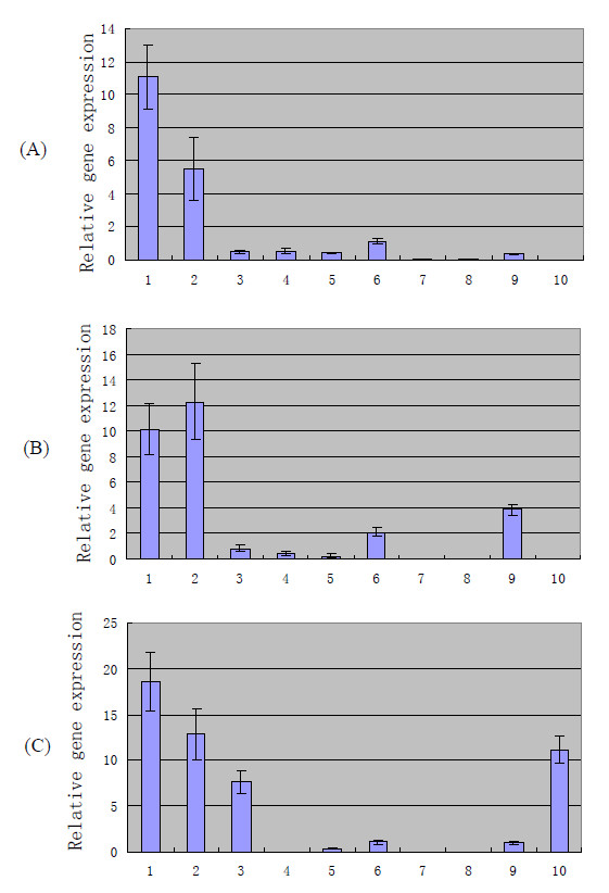 In vivo gene expression at 12 h (A), 24 h (B), and 36 h (C) relative to the highest level of expression in vitro by real-time <t>PCR</t> analysis . Total bacterial <t>RNA</t> extracted from strain ZY05719 grown in LB broth media was used as the template to assay the in vitro expression levels of the 10 newly identified genes. SPF minipigs were employed as model to study the in vivo expression levels. Pigs were inoculated intravenously with strain ZY05719, and bacterial cells recovered from blood at 12 h, 24 h, and 36 h post-inoculation were considered as in vivo growth bacteria. Total bacterial RNAs extracted from in vivo growth bacterial cells were further analyzed by real-time PCR. To determine whether RNA expression level is induced or upregulated under in vivo conditions, we compared in vivo gene expression with the highest level of expression in vitro . The standard deviations are presented from three pigs each, blood collected at 12, 24 and 48 h. 1, ss-1616 ; 2, trag ; 3, nlpa ; 4, srt ; 5, cwh ; 6, hprk ; 7, ysirk ; 8, ss-1955 ; 9, sdh ; 10, ss-1298 ; gapdh was used as reference gene.