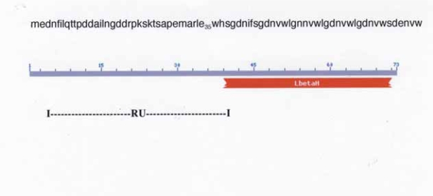 Amino acid sequence of YP_0349 and domain LbetaH (Left-Handed Parallel beta-Helix) location. The RU spans the first half of the peptide chain is shown. A number of bacterial transferases display the LbetaH motif with tandem hexapeptide repeats ( Raetz and Rod-erick, 1995 ). Part of the drawing is from the NCBI web site: http://www.ncbi.nlm.nih.gov/BLAST/Blast.cgi