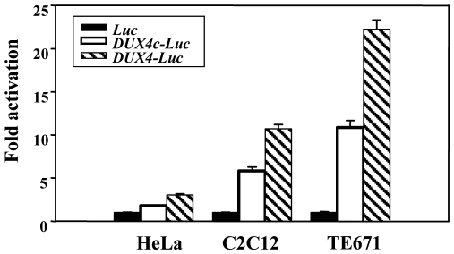 Transcriptional activity of the DUX4c gene. Transcriptional activity of the DUX4c promoter. HeLa, C 2 C 12 and TE671 cells were transfected with pGL3 vectors containing the luciferase reporter gene either promoterless (black bars) or fused to the DUX4c (white bars) or DUX4 ( striped bars) promoter. Luciferase activity was measured 24 h post-transfection and expressed relative to the activity of the promoterless vector set to 1. The means and standard errors are indicated (n = 18).