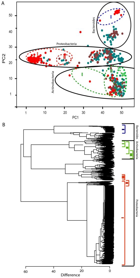 Total bacterial diversity associated with earthworms determined by 16S rRNA gene clone library analyses. PCA plot (A) and dendrogram (B) representation of all the bacterial 16S rRNA gene sequences (n = 1000) determined in this work. In the PCA plot, the major bacterial groups identified are marked with solid lines, while the selectivity of the amplicons used ( Table S1 ) are marked with color-code stippled lines. Corresponding color-coding is given for the dendrogram. The PCA color-coding represents the respective libraries; red – whole earthworm, brown – gut-dissected earthworm, and blue –bedding/feed. The PCA axis numbering represents the respective AIBIMM coordinates.