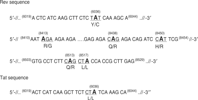A-to-I RNA editing at specific sites in the Rev and Tat coding sequence. The Rev and Tat coding sequence were analyzed by direct sequencing of RT–PCR products generated using as substrate the total RNA isolated as described in Figure 6 . Three independent co-transfection experiments with relative RT–PCR analysis were carried out. The edited adenosines found in the Rev and Tat coding sequence are numbered (relative to NL4-3) and shown in bold. The codons encompassing modified adenosines are underlined and the corresponding amino acids (before/after editing) are indicated.