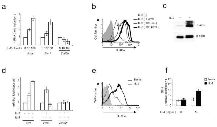 IL-2 potently induces IL-4Rα expression. ( a—c ) Mouse splenic T lymphocytes were pre-activated by anti-CD3 and anti-CD28 for 48 h, rested overnight, and then 0, 10, or 100 U/ml of IL-2 was added for 4 h. ( a ) Real time PCR was used to measure expression of the indicated mRNA transcripts. ( b,c ) Flow cytometry ( b ) and immunoblotting ( c ) were used to measure cell surface ( b ) and total ( c ) IL-4Rα expression. ( d ) Increased IL4R mRNA expression in human peripheral blood T cells pre-a ctivated with anti-CD3 and anti-CD28 and then stimulated with IL-2 or IL-4 for 4 h. ( e ) Increased IL-4Rα protein expression in human T cells pre-activated with anti-CD3 and anti-CD28 and then treated with IL-2 for 16 h. ( f ) Purified splenic CD4 + T cells were pre-activated with anti-CD3 and anti-CD28 for 72 h, washed and incubated without or with 10 U/ml IL-2 for 16 h, then washed twice with PBS, rested 18 h, and cultured without or with 10 ng/ml IL-4 for 4 h. Gfi1 mRNA was measured by RT-PCR. For each panel, 3-5 independent experiments were performed.