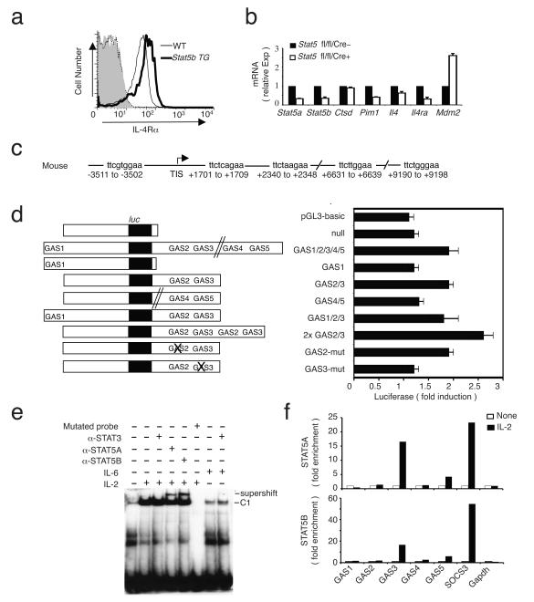 STAT5-dependent regulation of IL-4Rα expression. ( a ) IL-4Rα expression on splenic CD4 + T cells from wild-type and Stat5b transgenic mice 40 , as evaluated by flow cytometry. The experiment shown is representative of two independent experiments with 2 to 3 mice in each group. ( b ) Expression of indicated transcripts, after Cre recombinase-mediated deletion of the LoxP-flanked Stat5a / Stat5b locus 29 in splenic T cells that then were cultured with IL-2. See Supplementary Table 1 , online for the entire list of genes. Three independent experiments were performed. ( c ) Schematic of five TTCN 3 GAA potential GAS motifs in the mouse Il4ra gene 5′ regulatory region and first intron. GAS1 is approximately 3.5 kb (mouse) or 1.5 kb (human) 5′ of the Il4ra transcription initiation site (TIS), whereas GAS2, GAS3, GAS4, and GAS5 are in the first intron. ( d ) Indicated PCR-generated constructs (left; luc , luciferase) were transfected into YT cells not treated or treated with 100 U/ml of IL-2 and cell lysates were analyzed for luciferase activity (right). Three independent experiments were performed. ( e ) EMSA 41 using an Il4ra probe spanning GAS3 and nuclear extracts 41 from human peripheral T cells. Cells were untreated or treated with IL-2 or IL-6. For supershifting assays, each antiserum was pre-incubated with nuclear extracts before adding labeled probe. In lane 6, a probe mutated at GAS3 was the control. The experiment shown is representative of three independent experiments. ( f ) ChIP assays 41 of STAT5A and STAT5B binding using CD4 + splenic T cells from Balb/c mice pre-activated with anti-CD3 and anti-CD28 for 3 days, rested overnight, not treated or treated with 100 U/ml IL-2 for 4-5 h at 37 °C, followed by cross-linking with formaldehyde. Nuclear lysates were immunoprecipitated at 4°C overnight with anti-STAT5A, anti-STAT5B (R D Systems) or an isotype control antibody to allow normalization of the fold induction by IL-2. After deproteination and cross-link rev