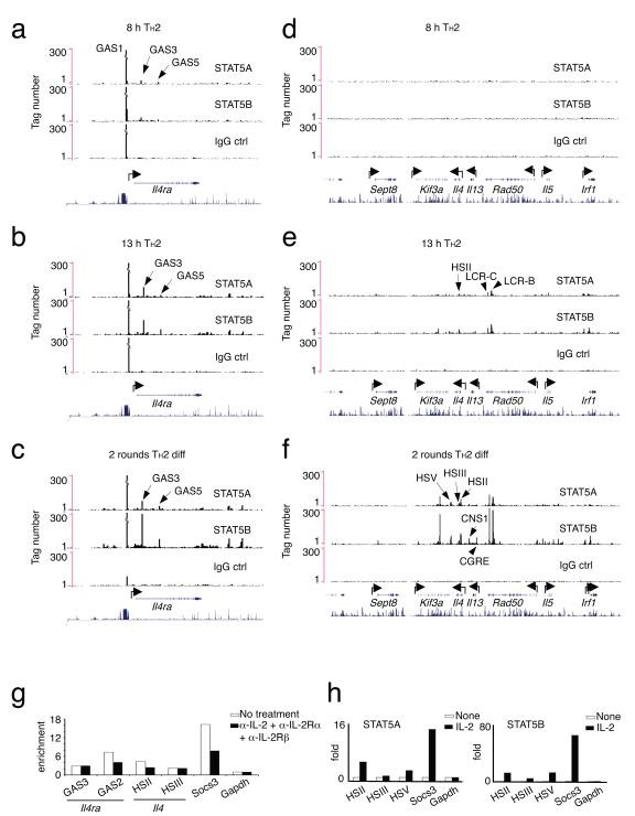 Analysis of STAT5 binding to the Il4ra and Il4 loci. (a-f) ChIP-Seq analysis was performed to analyze STAT5 binding at the Il4ra ( a-c) and Il4-Il13-Il5 (d-f) loci in CD4 + T cells cultured under T H 2 conditions (anti-CD3 + <t>anti-CD28</t> + 10 ng/ml IL-4 + 10 ug/ml anti—IFN-γ) for the indicated amounts of time. Cells subjected to two rounds of T H 2 differentiation refers to cells cultured under T H 2 conditions for 3 days, expanded with IL-4 and anti—IFN-γ for 2 days, washed, re-cultured under T H 2 conditions for another 3 days and then analyzed without further cytokine stimulation. These cells were not exposed to exogenous IL-2. Unique sequence reads were first adjusted to center them on the corresponding chromatin fragments. The adjusted reads were then summed in 400 bp windows and displayed as custom tracks on the UCSC genome browser. ChIP was performed with IgG as a control for STAT5A- and STAT5B-specific antibodies. Schematics of the Il4ra ( a-c ) and Il4-Il13-Il5 ( d-f ) loci with standard conservation tracks from the UCSC genome browser indicating the areas of highest conservation among 17 vertebrate species are shown in blue at the bottom of each panel. The experiment was preformed three independent times, with similar results. ( g ) T H 2 cells polarized for 2 rounds were incubated in the presence of 10 μg/ml each of anti-IL-2 (S4B6), anti-IL-2Rα (PC61) and anti-IL-2Rβ, all from BD Bioscience, for an extra 18 h and ChIP was preformed to assess STAT5B binding to indicated gene regions. (h) IL-2-induced binding of STAT5A and STAT5B to indicated gene regions, as measured by ChIP. This is representative of two similar experiments. See Supplementary Table 10 for sequences or primers used in ChIP experiments.